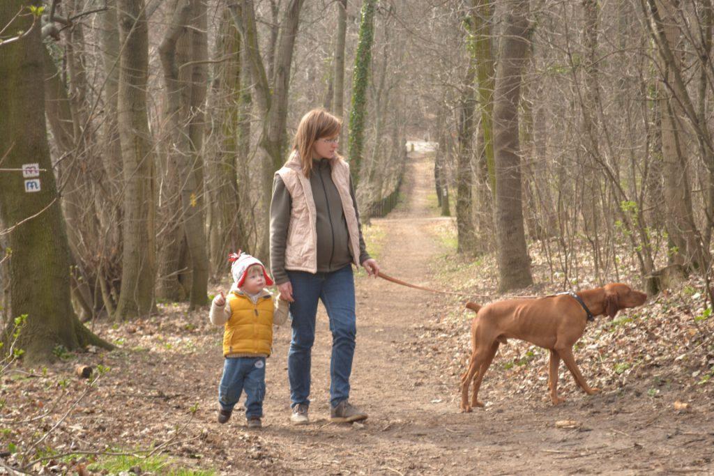 Erdei sétákon is tartsuk a kutyánkat pórázon!